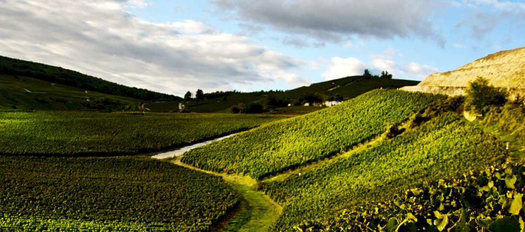 bollinger-the-cote-aux-enfants-the-quiet-strength-of-pinot-noir